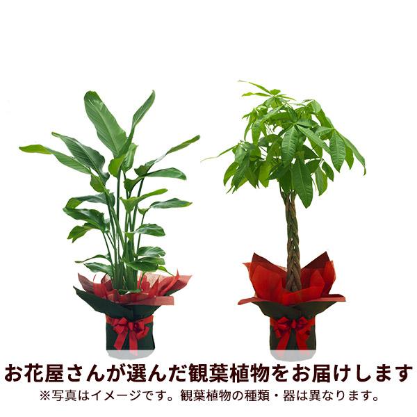 観葉植物を贈る|開店・開業祝いの花特集