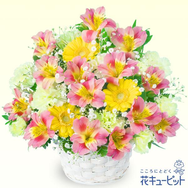 【お祝い】アルストロメリアのアレンジメント旬の花をつかった定番アレンジメント!
