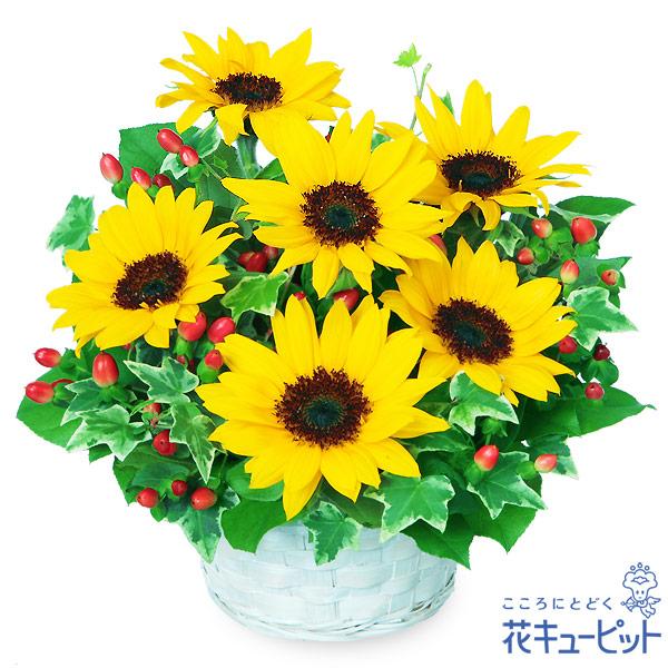 【誕生日フラワーギフト】ひまわりのアレンジメントひまわりの可愛いアレンジメント!