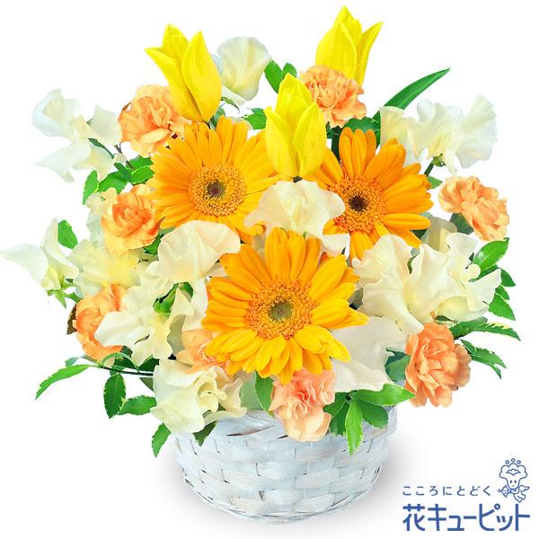 【お祝い】春のイエローアレンジメント(イエロー&オレンジ)元気いっぱい春のバスケットアレンジメント!