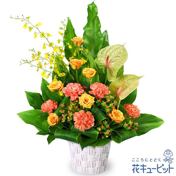 【お誕生日祝い(法人)】オレンジバラのアレンジメント