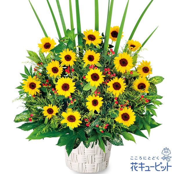 【父の日】ひまわりの華やかアレンジメント夏の贈りものにぴったり!ひまわりを贅沢に使ったアレンジ♪