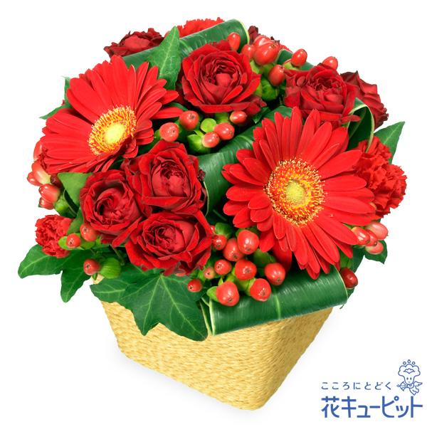 【お祝い】赤ガーベラと赤バラのアレンジメント上品でシックなバスケットアレンジメント