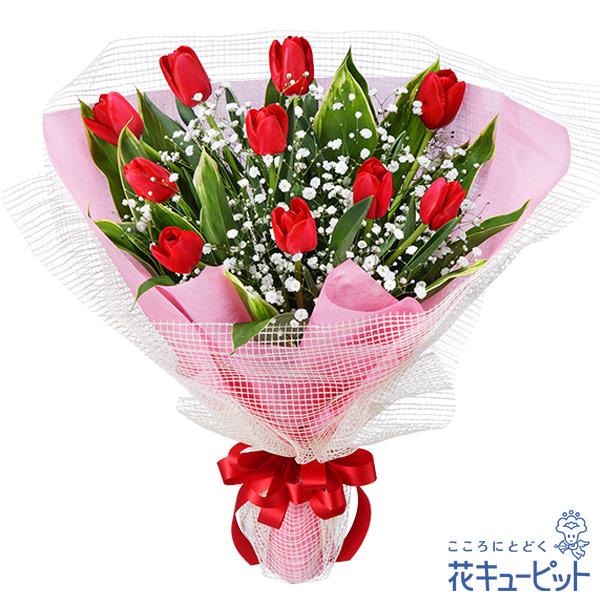 【お祝い】チューリップの花束人気のチューリップ!シンプルで美しい花束