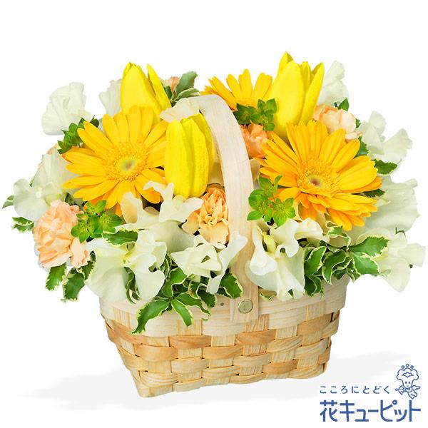 【お祝い】チューリップとガーベラのバスケットアレンジメント優しく包み込んでくれる、春の日差しをイメージしたアレンジ