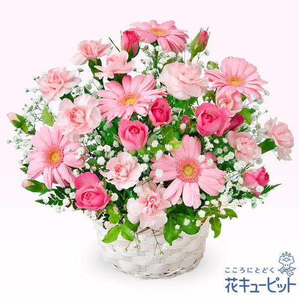 【お祝い】ピンクガーベラのアレンジメント乙女心をくすぐるピンクガーベラのアレンジメント