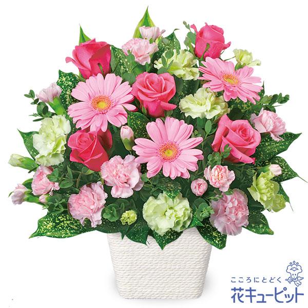 【お祝い】ピンクガーベラのアレンジメントキュートなピンク色のアレンジメント!