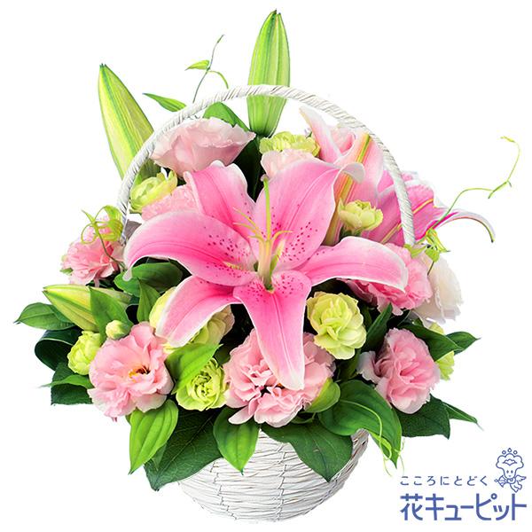 【お祝い(法人)】ピンクユリのバスケットアレンジメント