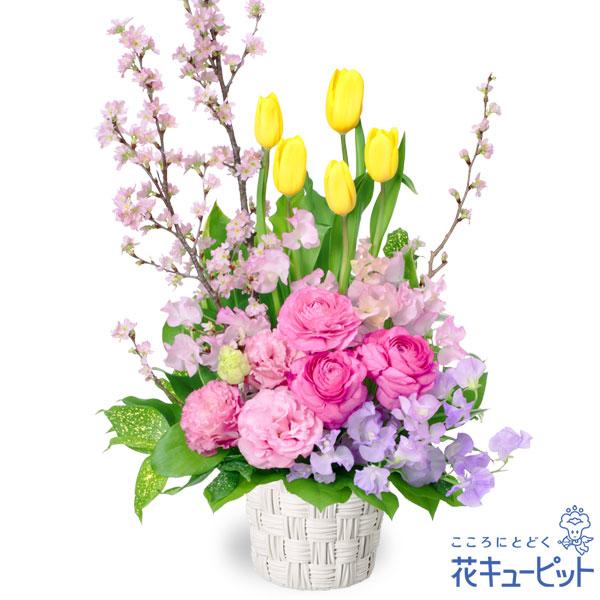 【誕生花 2月(チューリップ等)(法人)】チューリップと桜のアレンジメント
