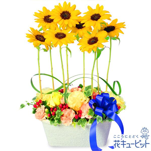 【ひまわり特集】ひまわりのモダンアレンジメントブルーリボンとひまわりが明るい夏の風を届けるアレンジメント