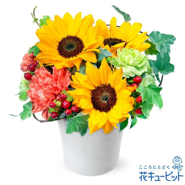 【ペット用フラワーギフト・お祝い】ひまわりのアレンジメント夏のプレゼントにおすすめ!夏色のアレンジメント