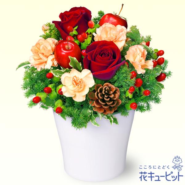 【クリスマスフラワー ランキング】赤バラのウィンターアレンジメント幅広い年代の方に喜ばれるアレンジメント