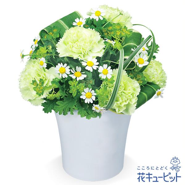 【春のお誕生日】グリーンカーネーションのアレンジメント大切な方に爽やかな癒しをお届けします