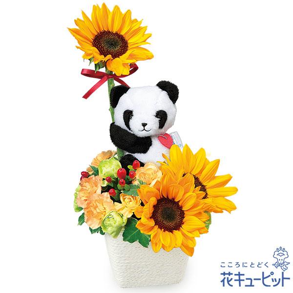 【誕生日フラワーギフト】ひまわりのマスコット付きアレンジメント(パンダ)可愛いパンダが心に太陽を届けます