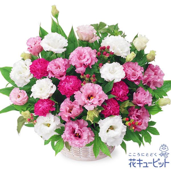 【退職祝い】2色トルコキキョウのアレンジメントフリルのような花びらが美しいトルコキキョウのアレンジメント