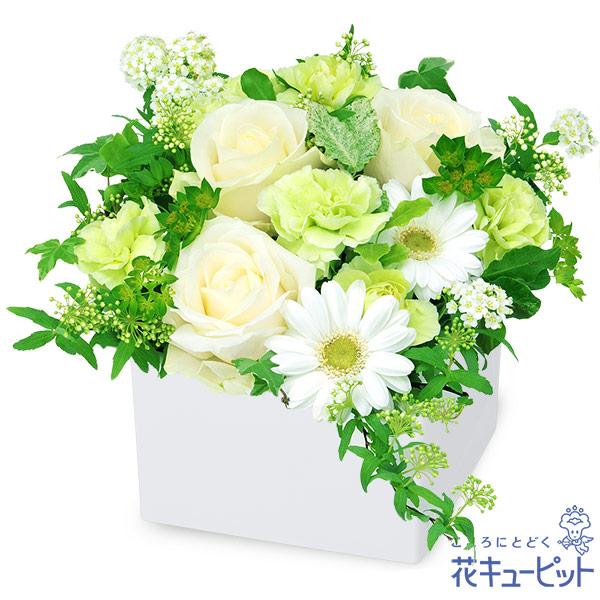 【ご結婚記念日(法人)】白バラのキューブアレンジメント