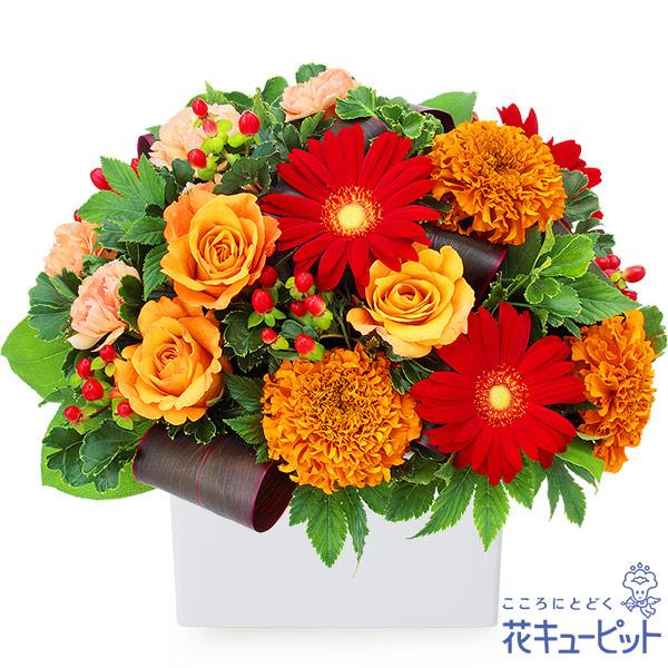 【10月の誕生花(オレンジバラ)】オレンジバラと赤ガーベラのアレンジメント赤とオレンジを基調にしたおしゃれなキューブアレンジメント
