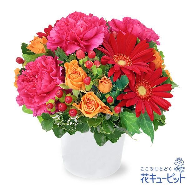 【11月の誕生花(ガーベラ)(法人)】赤ガーベラの鮮やかアレンジメント