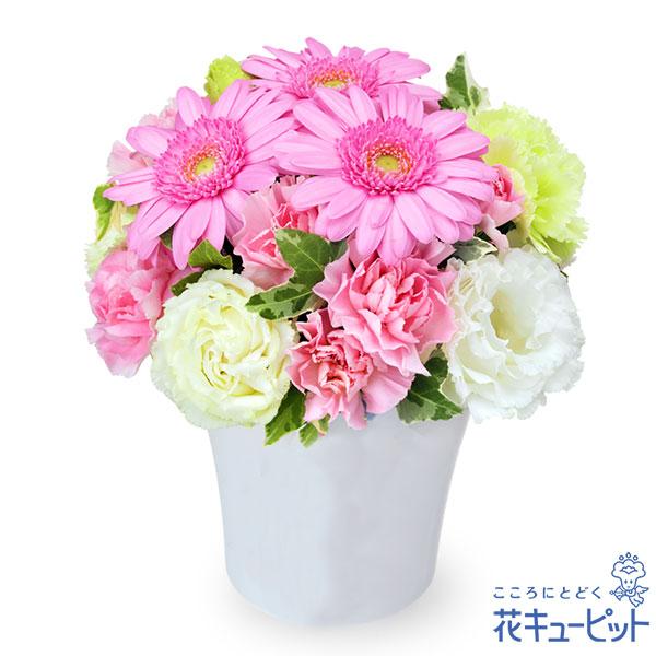 【お祝い】ピンクガーベラのナチュラルアレンジメント飾る場所を選ばない上品なフラワーギフト