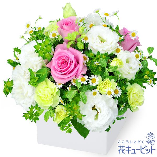 【誕生日フラワーギフト】ピンク&ホワイトのキューブアレンジメント爽やかで清楚なアレンジメント