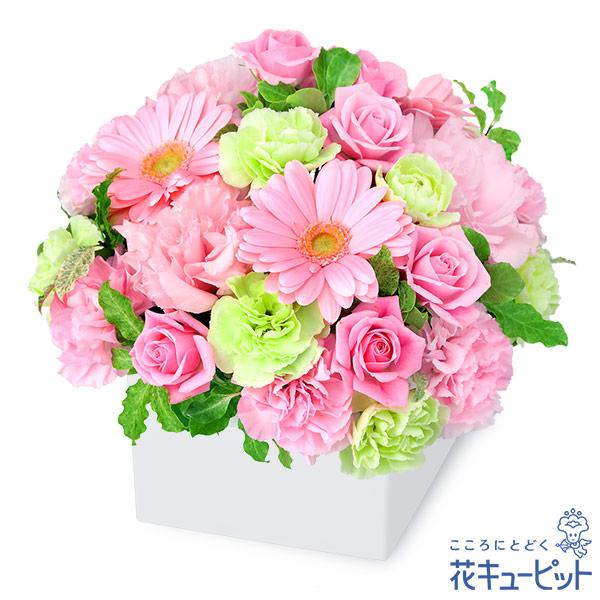 【お見舞い(法人)】ピンクガーベラのキューブアレンジメント