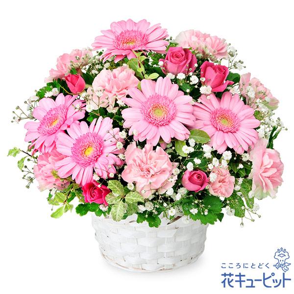 【お誕生日祝い(法人)】ピンクガーベラのアレンジメント