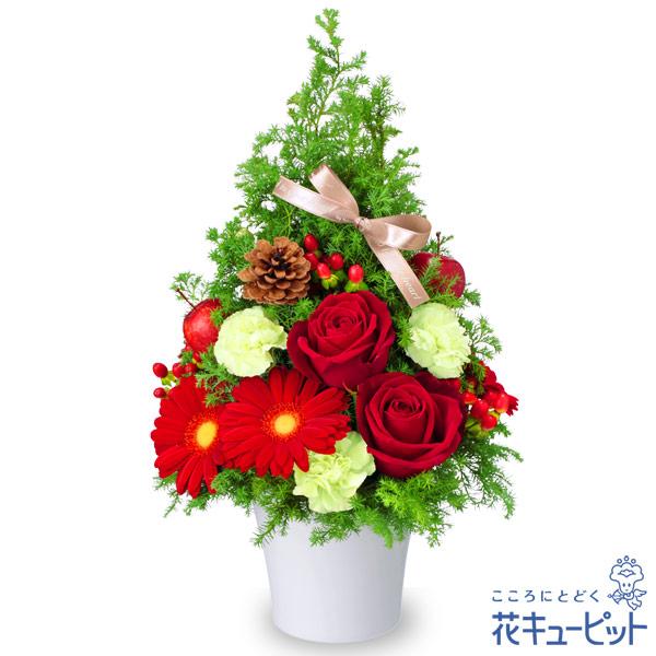 【クリスマスフラワー】クリスマスのツリー風アレンジメント赤×グリーンのクリスマスカラーアレンジメント