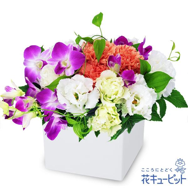 【誕生花 9月(デンファレ)(法人)】デンファレのキューブアレンジメント
