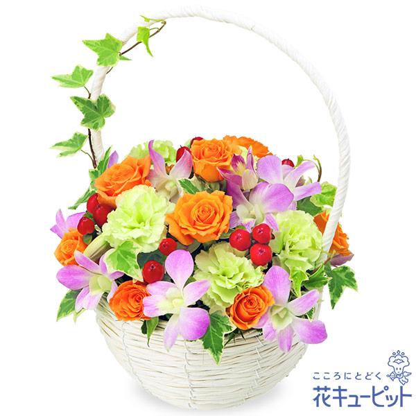 【ご出産祝い(法人)】デンファレのナチュラルバスケット