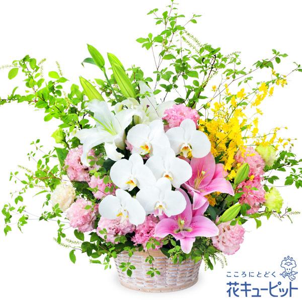 【お中元(サマーギフト)】ピンクユリと胡蝶蘭のアレンジメント高級感のある花々が、注目を集めるアレンジメント