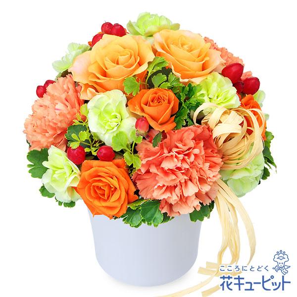 【お祝い】オレンジバラのナチュラルアレンジメントジューシーな色合いのアレンジメント