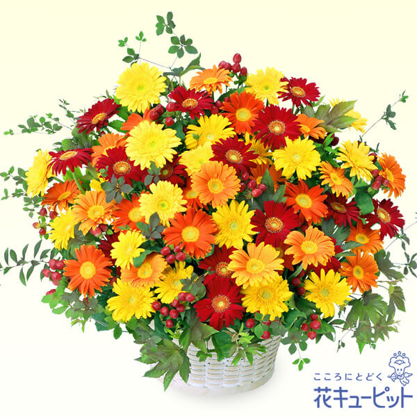 【ご昇進・ご栄転(法人)】3色ガーベラのアレンジメント
