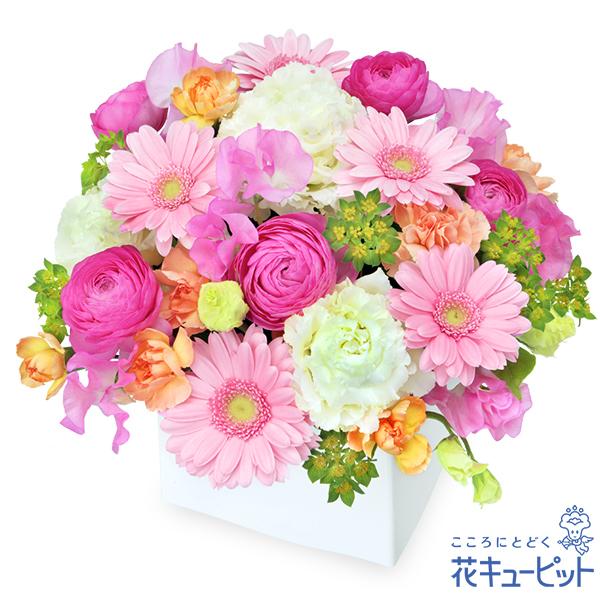 【お祝い】ピンクガーベラのキューブアレンジメントピンク中心でまとめた可愛らしい花々で気持ちが伝わります