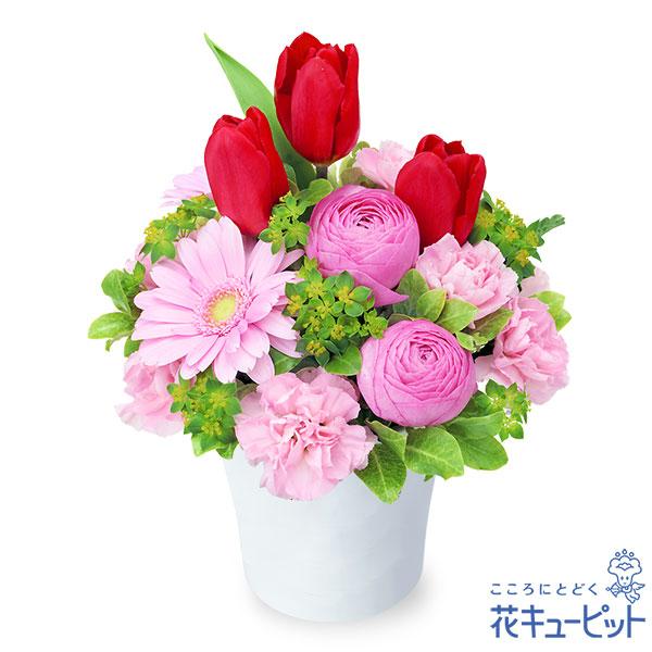 【誕生花 2月(チューリップ等)(法人)】赤チューリップのナチュラルアレンジメント