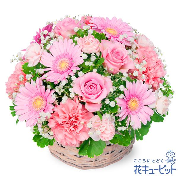 【お祝い】ピンクのアレンジメント丸みがあり優しいデザインのアレンジメントです