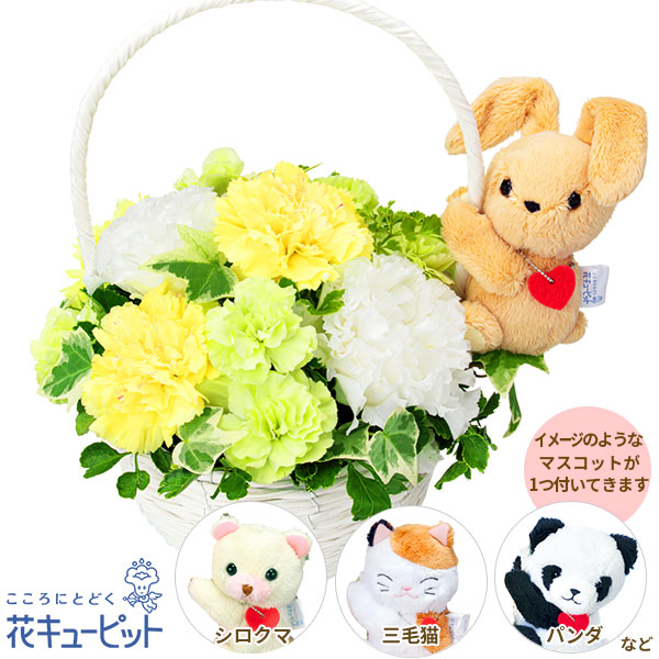 【お祝い】トルコキキョウのマスコット付きバスケットふんわりとした花びらが優しげなアレンジメント