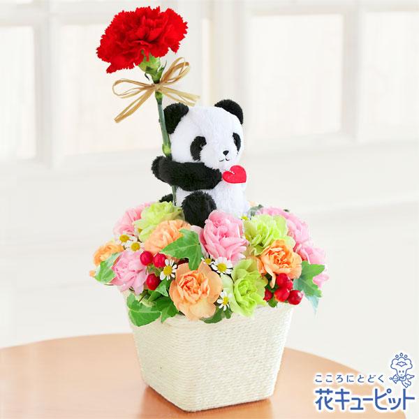 【母の日ギフト】パンダのアレンジメント可愛らしいパンダにお母さんもニッコリ♪