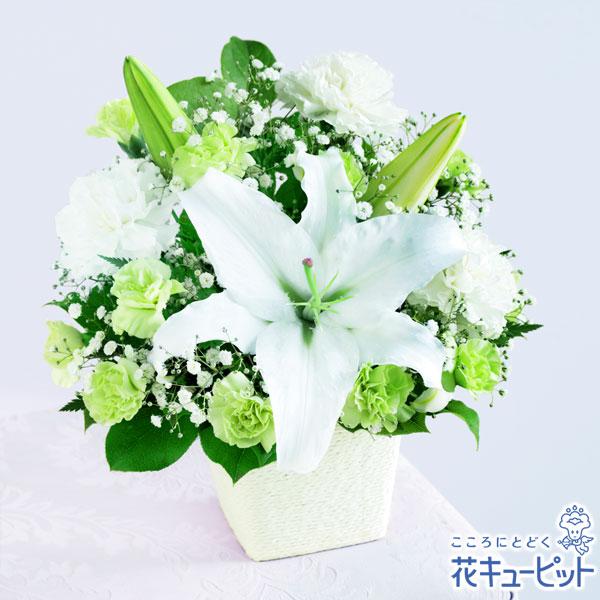 【母の日 お供え】フォーエバーママ亡くなられたお母さんに贈る母の日ギフトです