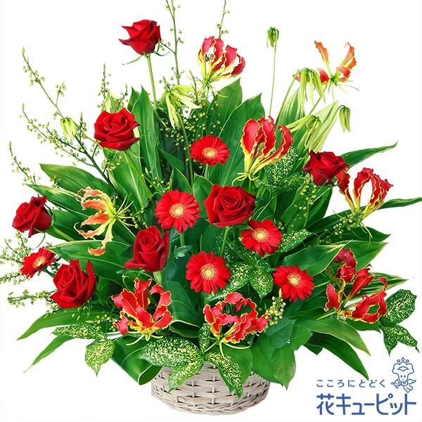 【お祝い(法人)】赤のアレンジメント