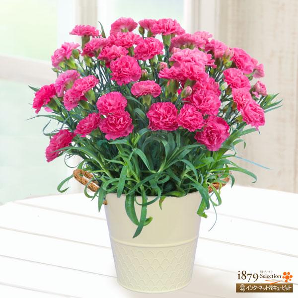 全ての産直花鉢を見る|母の日プレゼント特集2019