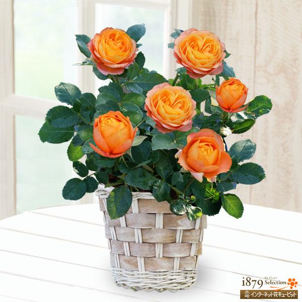黄色・オレンジ系の花鉢|母の日プレゼント特集2019