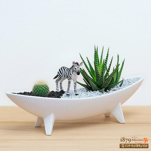【産直 サボテン・多肉植物】多肉植物寄せ植え(シマウマ)まるでサバンナの風景を切り取ったような多肉植物の寄植
