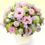 トルコキキョウを贈る|お祝い花材から選ぶ