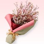 花束|春の誕生日特集2020