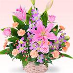 ユリを贈る|お祝い花材から選ぶ
