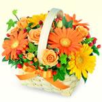 ガーベラを贈る|お祝い花材から選ぶ