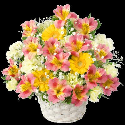4月の誕生花 アルストロメリア
