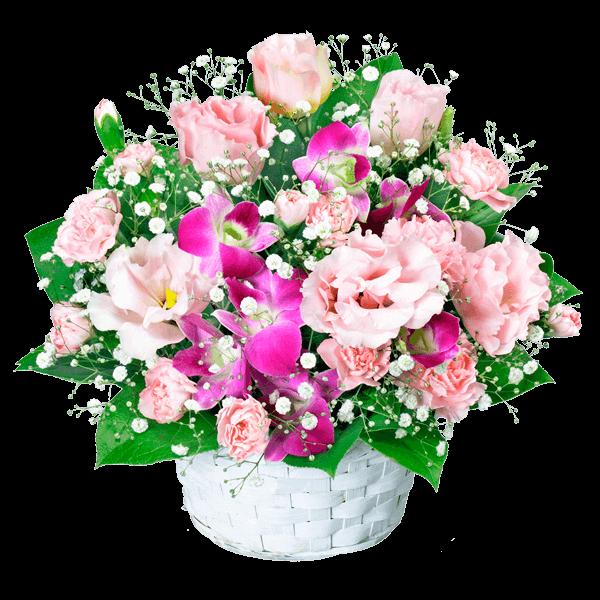【誕生日フラワーギフト】トルコキキョウとデンファレのアレンジメント