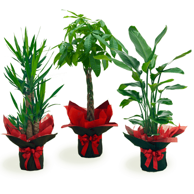i879selection おまかせ観葉植物