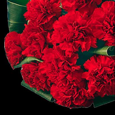 花キューピットタウン 母の日特集